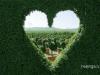 Сердце из самшита