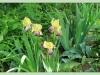 Изысканно- волшебные цветы
