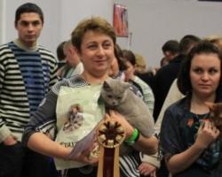 На выставке кошек