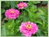 мой цветник