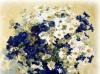 Бело-синий букет
