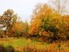 Прогулка в осень