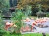 птицы Пражского зоопарка