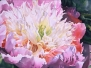Цветы. Акварель