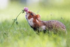 Вдыхая аромат цветов