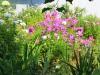 Я люблю когда цветут цветы